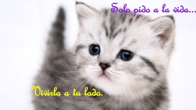 Frases Lindas para mi Gato