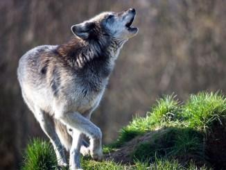 Cómo Podemos Proteger a los Animales en Peligro de Extinción