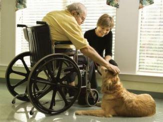 Qué es la Zooterapia o Terapia Asistida con Animales