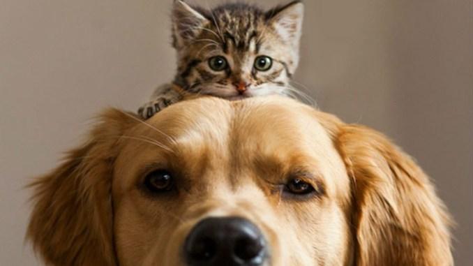 Razones por las que los Gatos son Mejores que los Perros