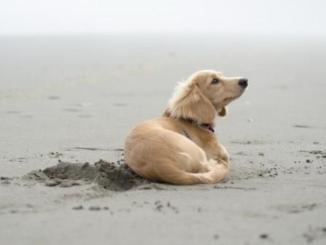 Por qué los perros dan vueltas antes de echarse en el piso
