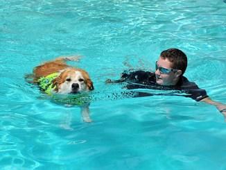 Cómo Enseñar a mi Perro a Nadar
