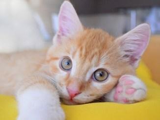Remedios Caseros para Parásitos de Gatos