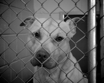 Cómo y dónde denunciar un maltrato animal