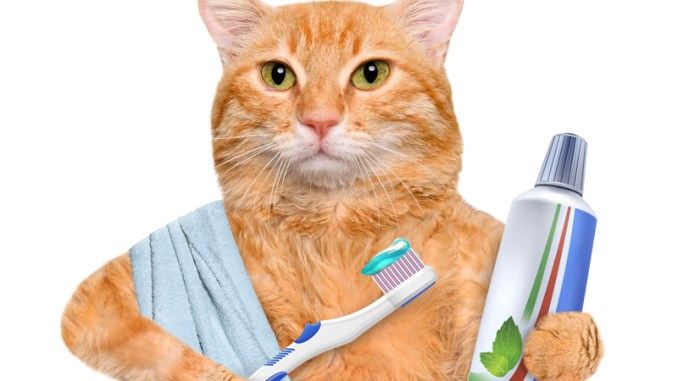 Higiene Bucal y Salud Dental del Gato