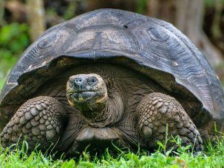 Los Animales más Longevos o Viejos del Mundo