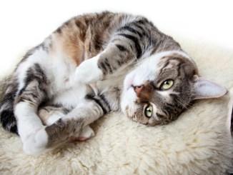 Comportamiento extraño del gato