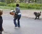 babuino4