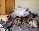 Jugando con el resto de las mascotas