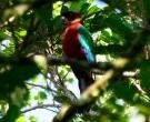 Papagayo-Granate-(3)