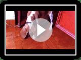 Mafalda Con insecto (Beagle-Harrier Limon-Zitrone)