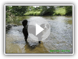 Appenzeller sennenhund- Jack is swimming