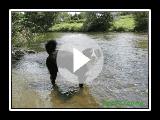 Appenzeller sennenhund- Jack is Swimming