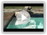 Comment traverser pugs piscines