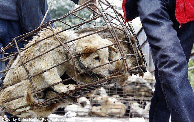 11 Länder Die Noch Hundefleisch Essen Haustiere