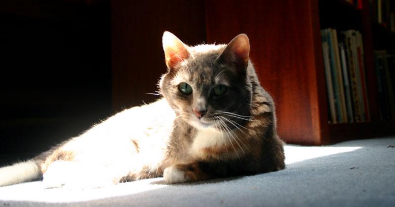 sun patch cat