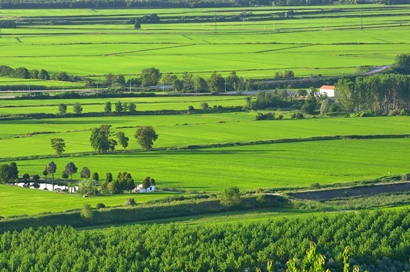 The Green Rice Fields of Vercelli - Photo of Andrea Caranti