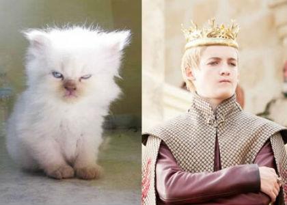 cat-of-thrones-11