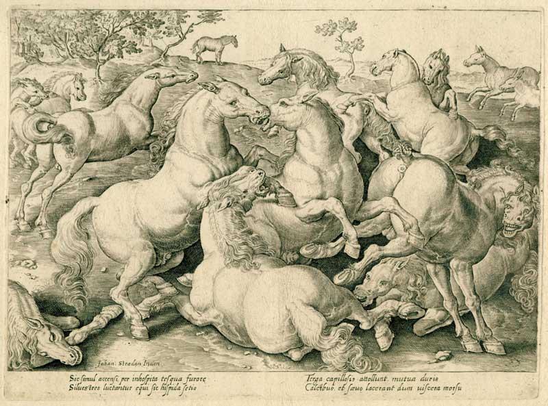 Giovanni Stradano, lotta tra cavalli, incisione