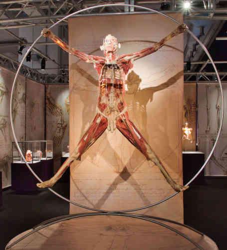 Uomo vitruviano. Mostra Authentic Human Bodies. Leonardo da Vinci, Venezia.