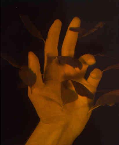 Daniel Steegmann Mangrané, Mano con hojas, 2013. Ologramma. Courtesy dell'artista, KADIST collection