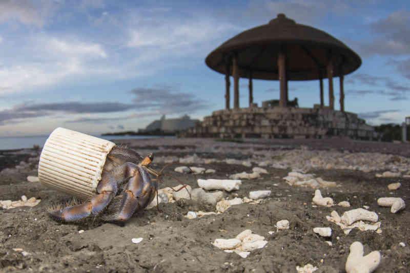 Shawn Miller: Nell'isola giapponese di Okinawa, un paguro eremita usa un tappo di plastica per proteggere il suo addome molle. In spiaggia gli uomini raccolgono le conchiglie usate dai paguri e abbandonano rifiuti.