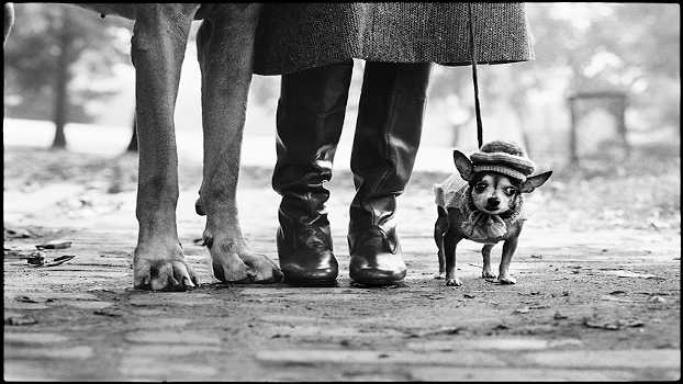 Elliott Erwitt, New York City, USA, 1974. © Elliott Erwitt