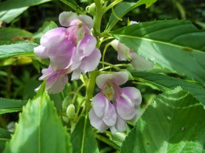 tanaman--herbal.blogspot.com