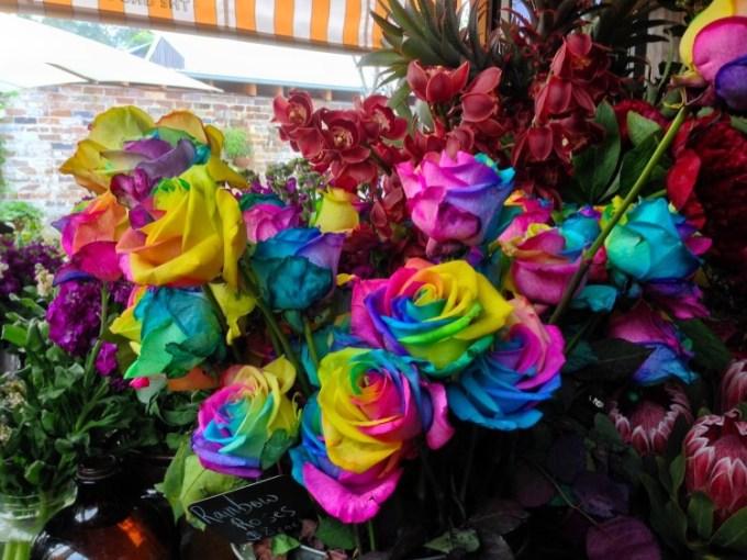 mawar pelangi
