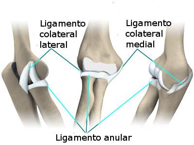 Tipos de lesiones de codo – Mas Fuerte que el Hierro
