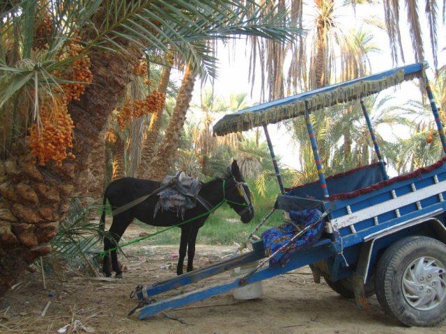 Picture Masr