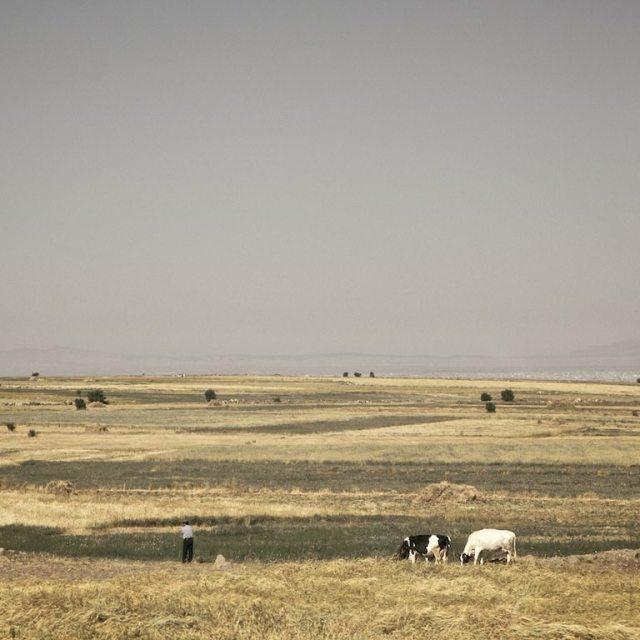 fields of loneliness Hamed Masoumi Tehran 7