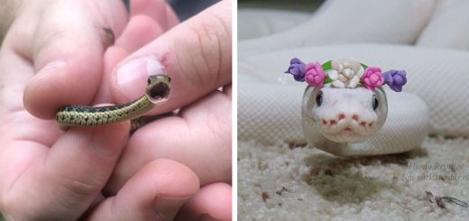 10 Cute Snake Pics That Might Help You to Defeat Your Fear