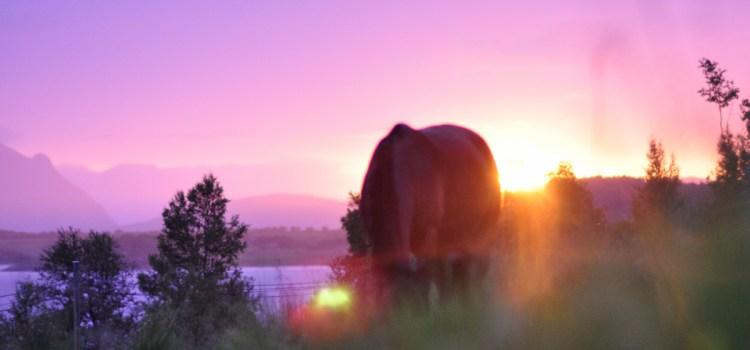Bare en hest for deg, ALT i verden for meg…