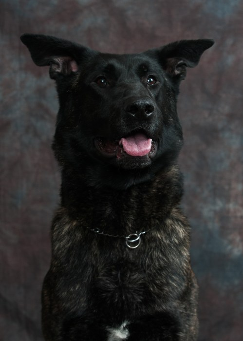 Mason Co. Sheriff's K-9 Cash