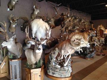 Legends Taxidermy has a large variety of domestic and international animals on display at their business located at 5089 N US 31 in Scottville.