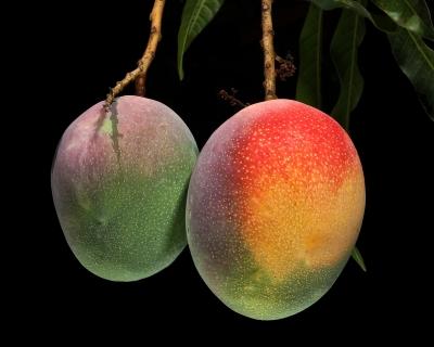 los mangos mas caros