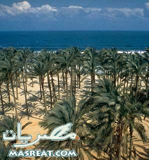 بيع اراضي سيناء