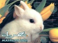 مسجات عيد القيامة المجيد