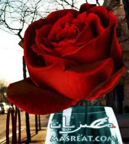 رسائل معايدة وبطاقات تهنئة بمناسبة شم النسيم