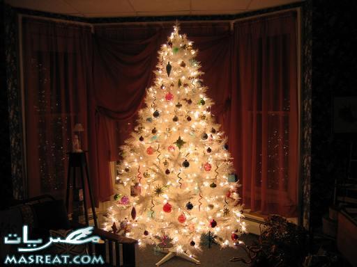 صور شجرة عيد الميلاد