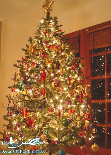 صور شجرة راس السنة