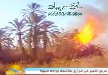 اهالي الواحة: حريق سيوة يقف وراءه مهربين   يوتيوب