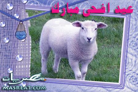 صور خروف العيد الاضحى المبارك 2019 - 2020