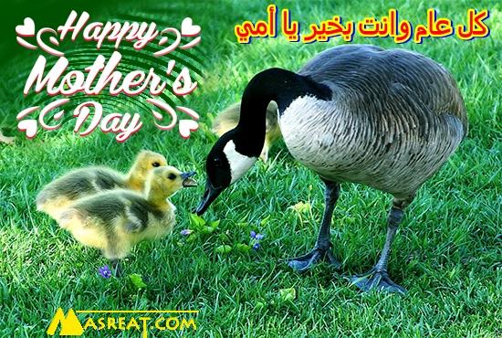 عبارات تهنئة مصورة عن عيد الأم