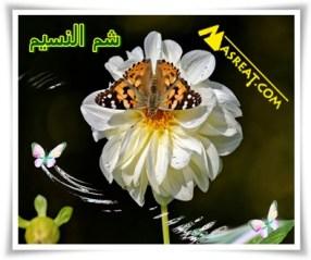 معلومات عن تاريخ عيد شم النسيم
