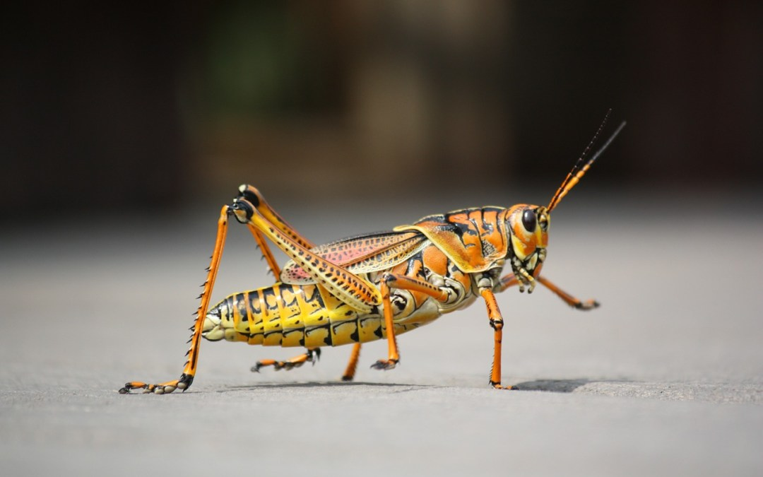 Los beneficios de comer insectos