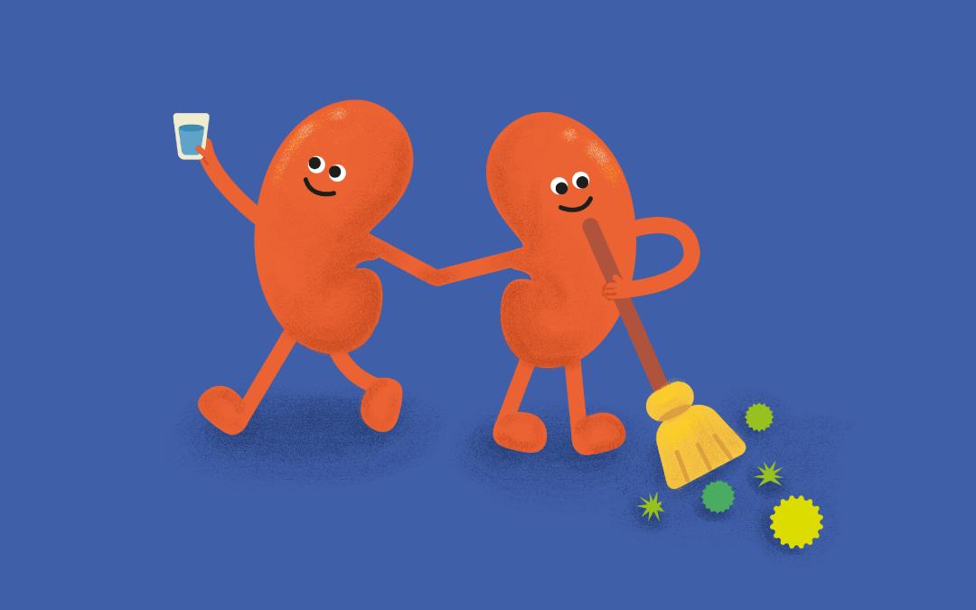 ¿Cuáles son las funciones de los riñones?