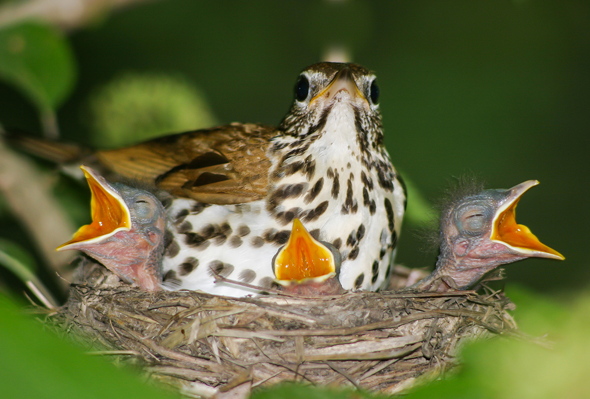 Baby Birds Out Of The Nest