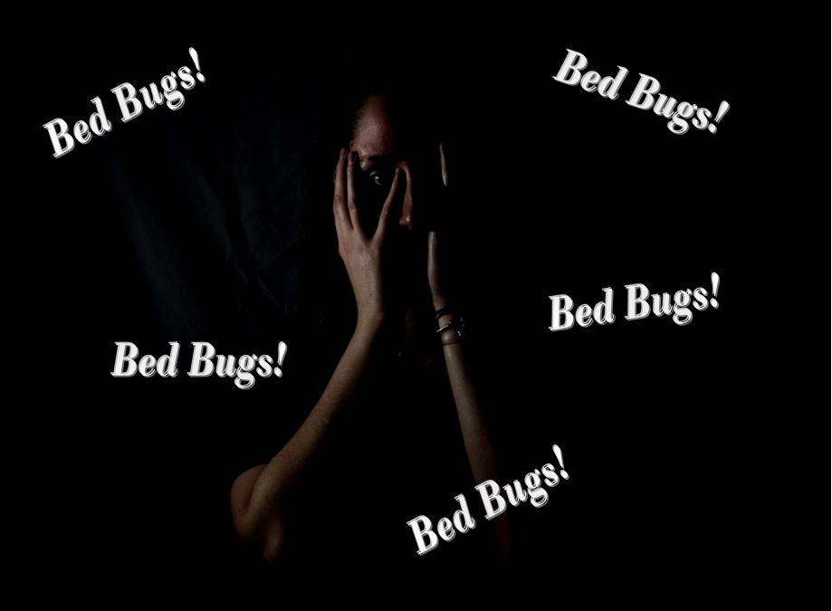 The Seven Letter Nightmare – BED BUGS!